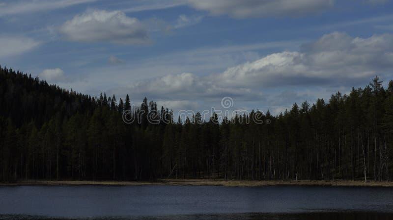 Озеро лес в Швеции стоковые фото