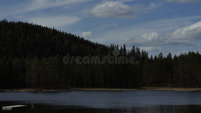 Озеро лес в Швеции стоковое изображение