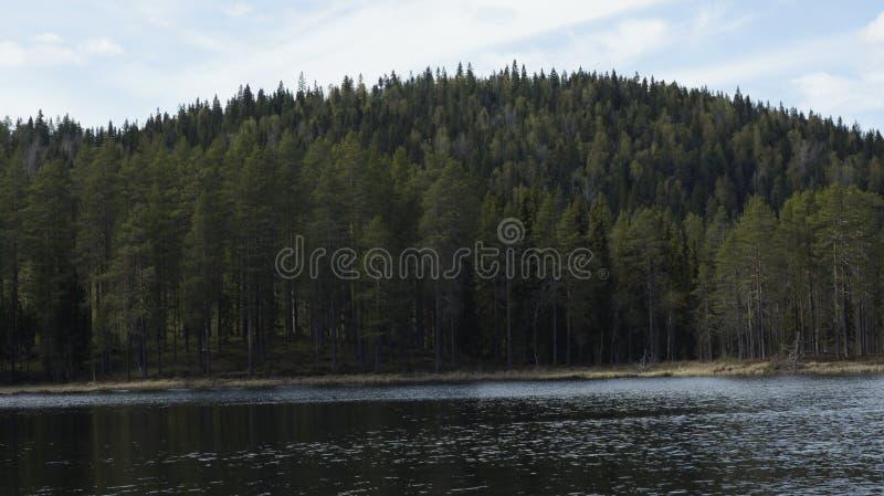 Озеро лес в Швеции стоковые фотографии rf
