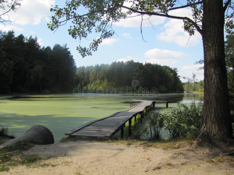 Озеро лес стоковая фотография