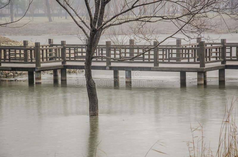 Озеро лед, деревянный мост и дерево стоковая фотография rf