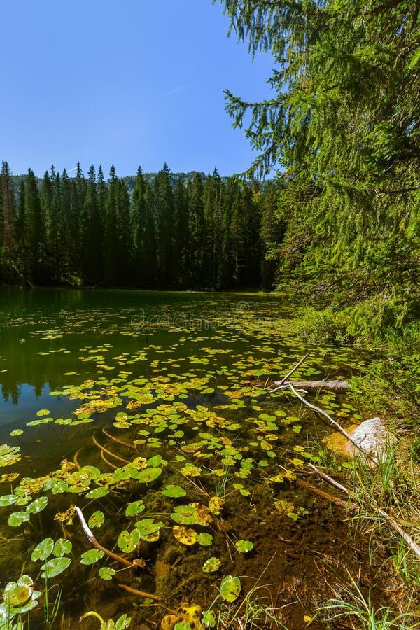Озеро змейк в Durmitor - Черногории стоковая фотография rf