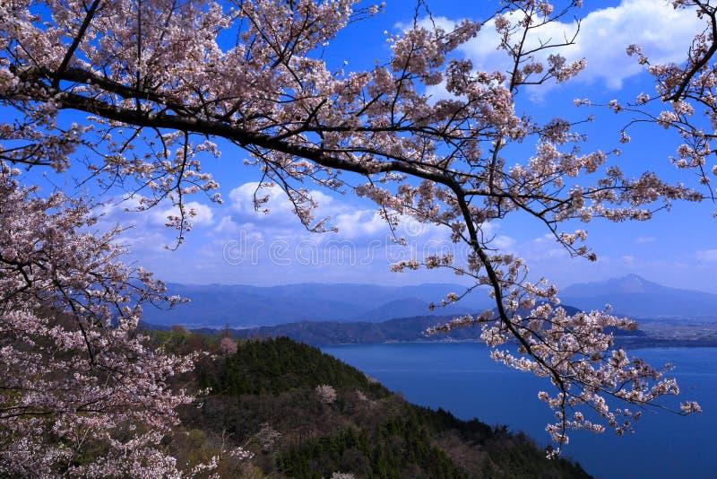 Озеро и вишня Biwa стоковое изображение