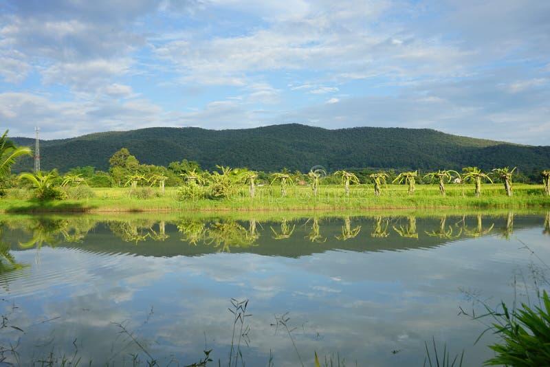 Озеро и гора стоковое фото rf