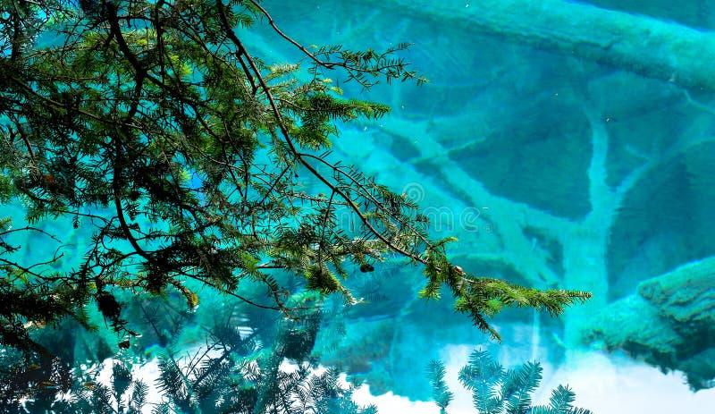 Озеро и деревья в Jiuzhaigou Valley, Сычуань, Китае стоковое фото