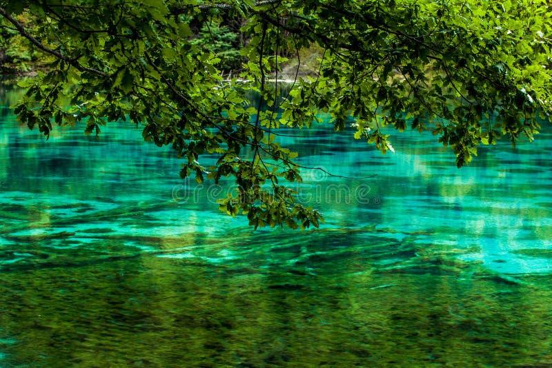 Озеро и деревья в Jiuzhaigou Valley, Сычуань, Китае стоковые фотографии rf