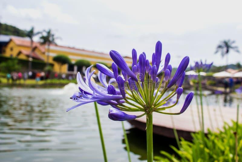Озеро и цветок стоковые изображения