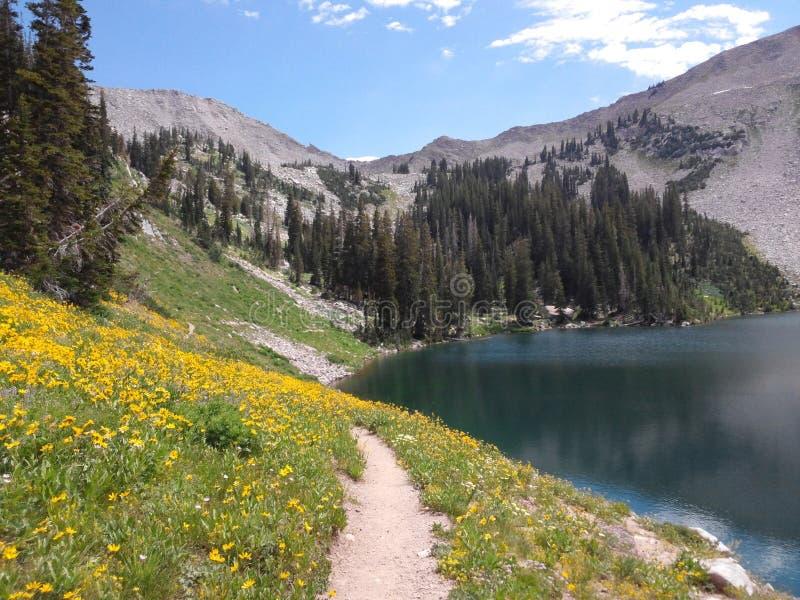 Озеро и wildflowers гор стоковые изображения