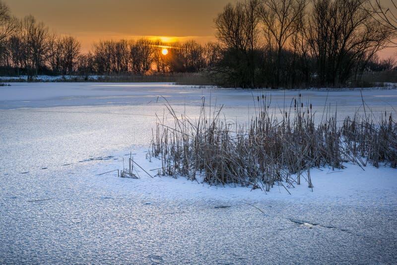 Озеро, который замерли с тростниками стоковые изображения