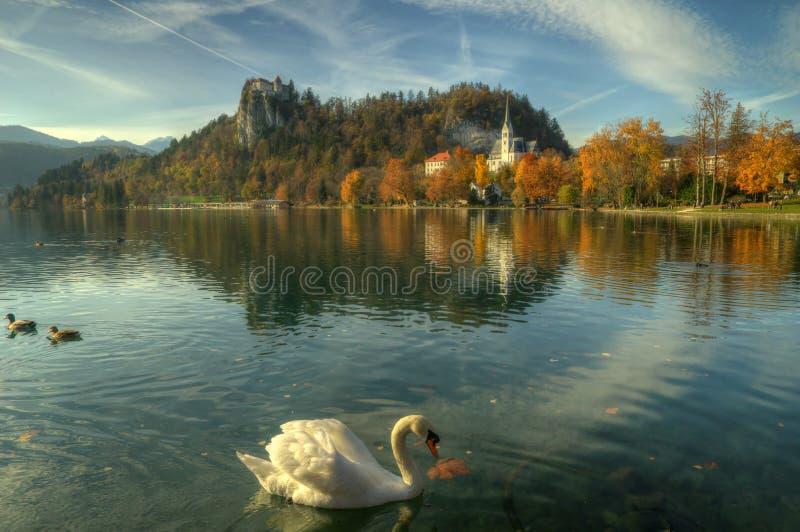 Озеро кровоточило, кровоточенный замок и Марина St церков - изображение осени стоковые изображения