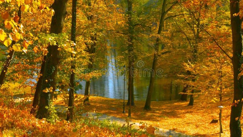 Озеро лес в предыдущей осени в центральной части Польши стоковое изображение rf
