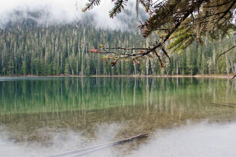 Озеро лес в тумане, озере Joffre стоковое фото rf
