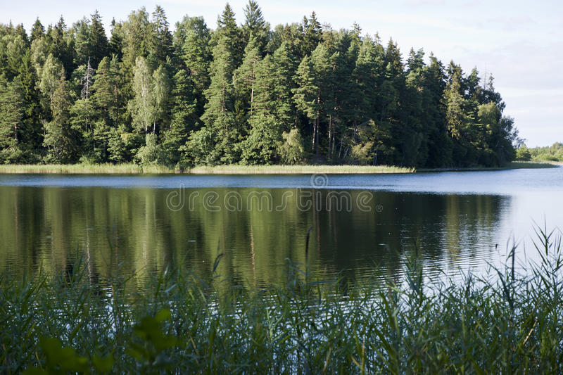Озеро лес, тростники, отражения воды стоковое фото