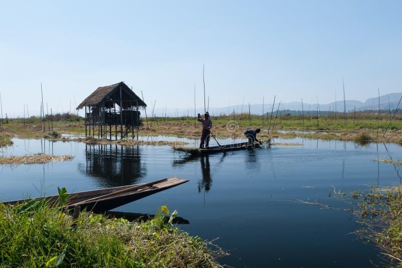 Озеро Мьянма Inle, положение Шани плавая сады стоковые фотографии rf