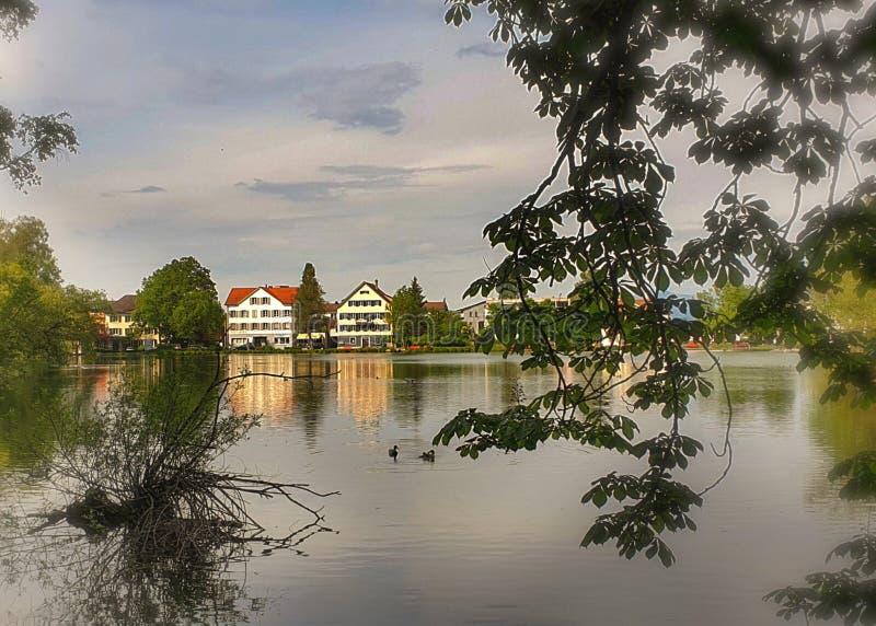 озеро, наш маленький городок, силуэты деревьев, werdenbergersee стоковое изображение rf