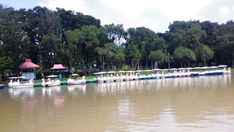 Озеро парка Chatuchak стоковые фотографии rf