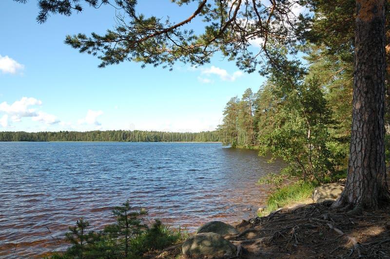 озеро поля стоковая фотография
