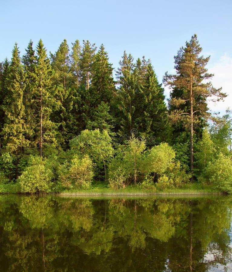 озеро пущи вечера стоковое фото rf