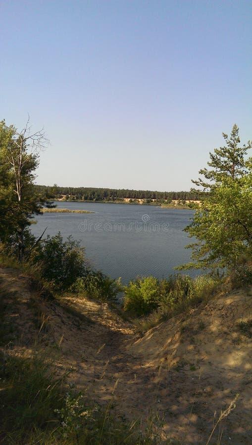 Озеро древесин стоковые фотографии rf