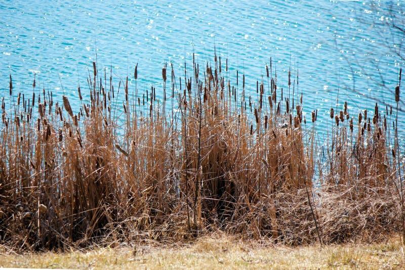 Озеро рек стоковые фото