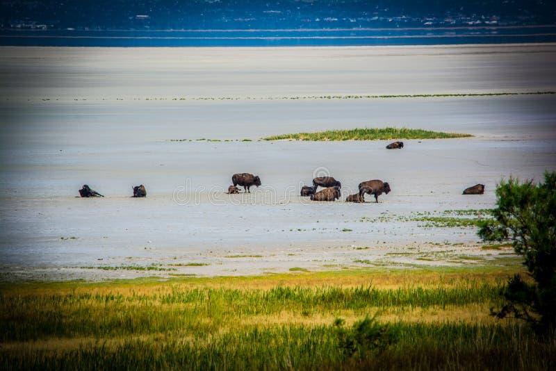Озеро сол буйвола стоковая фотография rf