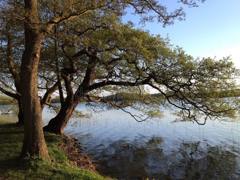 Озеро с валами Озеро с деревьями близко Soro в Дании Деревья берега озера в осени стоковая фотография rf