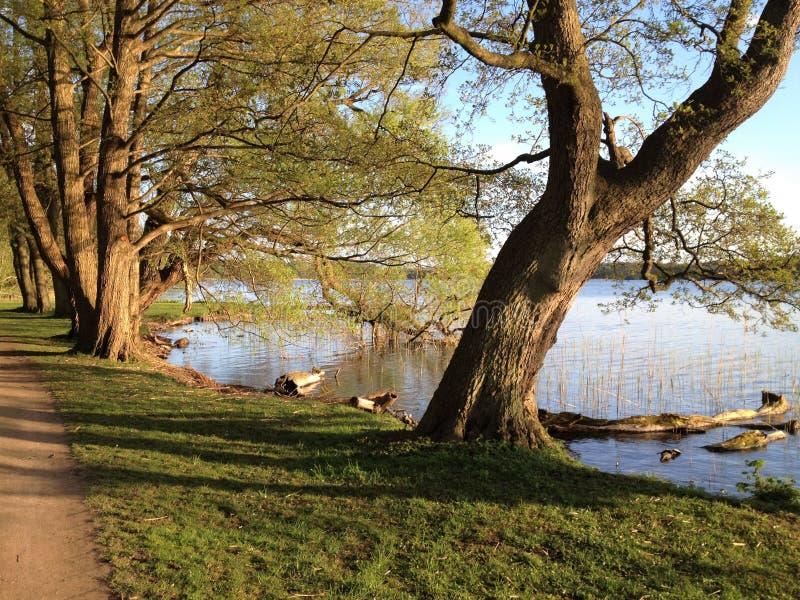 Озеро с валами Озеро с деревьями близко Soro в Дании Деревья берега озера в осени стоковые изображения rf