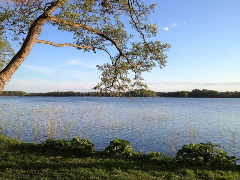 Озеро с валами Озеро с деревьями близко Soro в Дании Деревья берега озера в осени стоковая фотография
