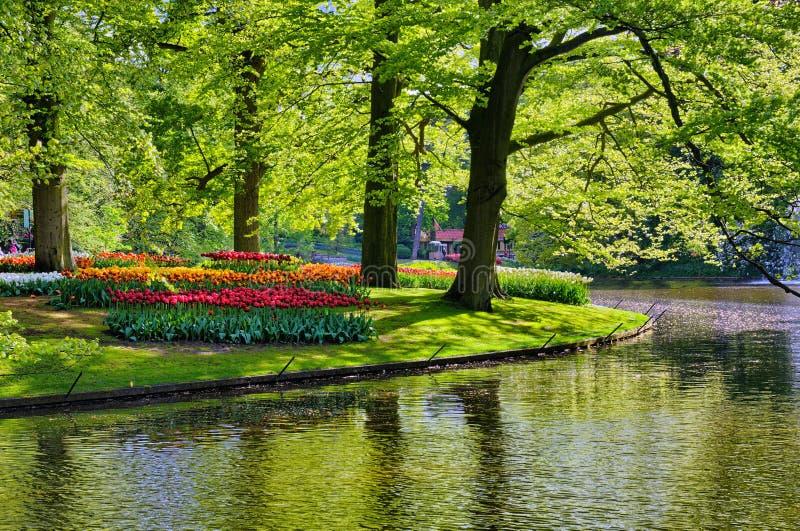 Озеро с красивыми белыми лебедями в парке Keukenhof, Lisse, Голландии стоковая фотография rf