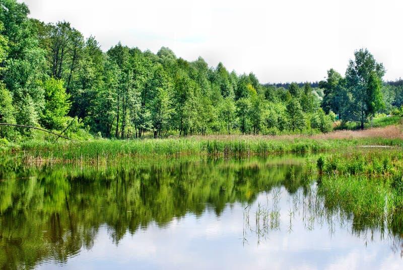 Озеро с отражением леса стоковое фото rf