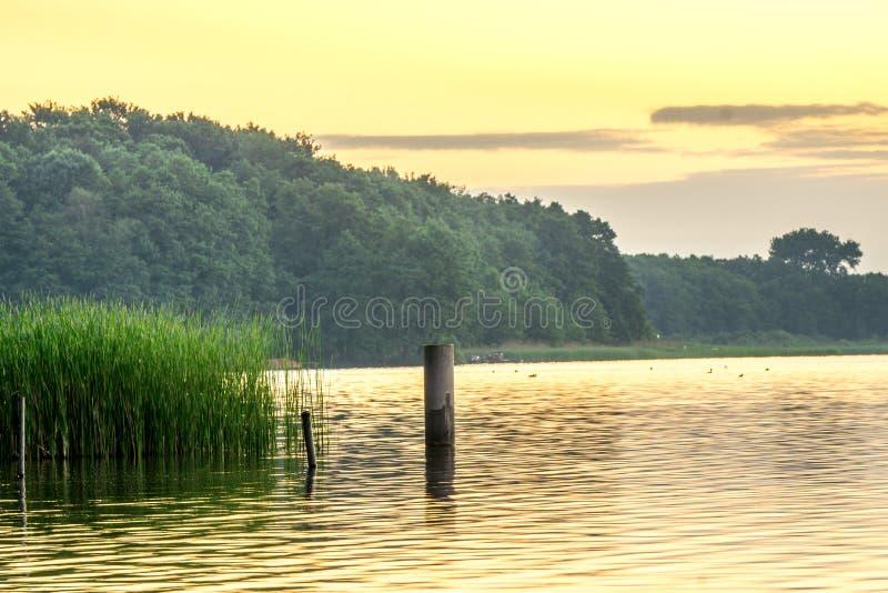 Озеро с тростниками на восходе солнца стоковое изображение