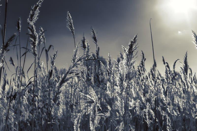 Озеро с тростники на переднем плане стоковые фото