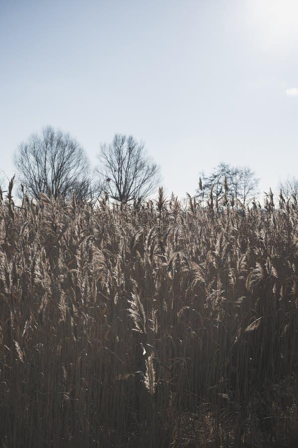 Озеро с тростники на переднем плане стоковое изображение