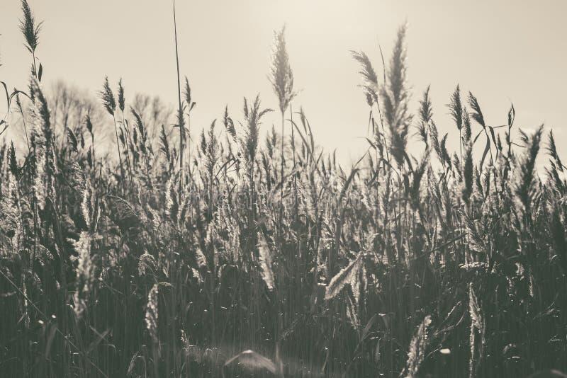 Озеро с тростники на переднем плане стоковые изображения