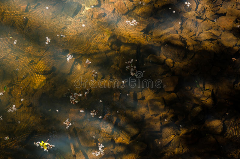Озеро с цветками стоковые фотографии rf