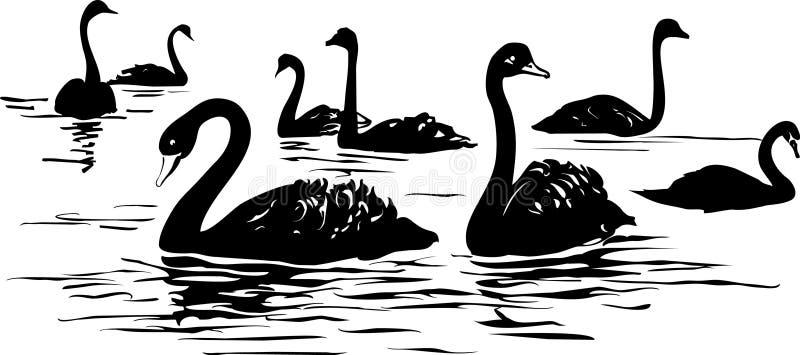 озеро с черными лебедями иллюстрация вектора