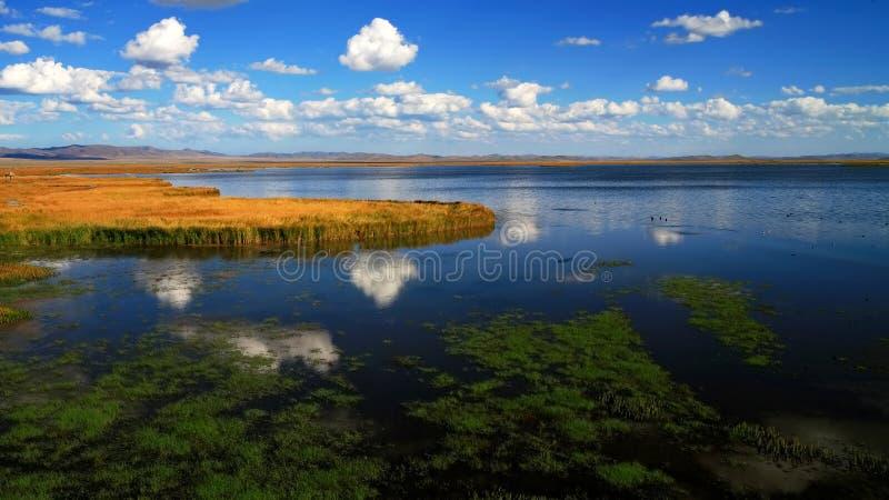 озеро цветка стоковые фото