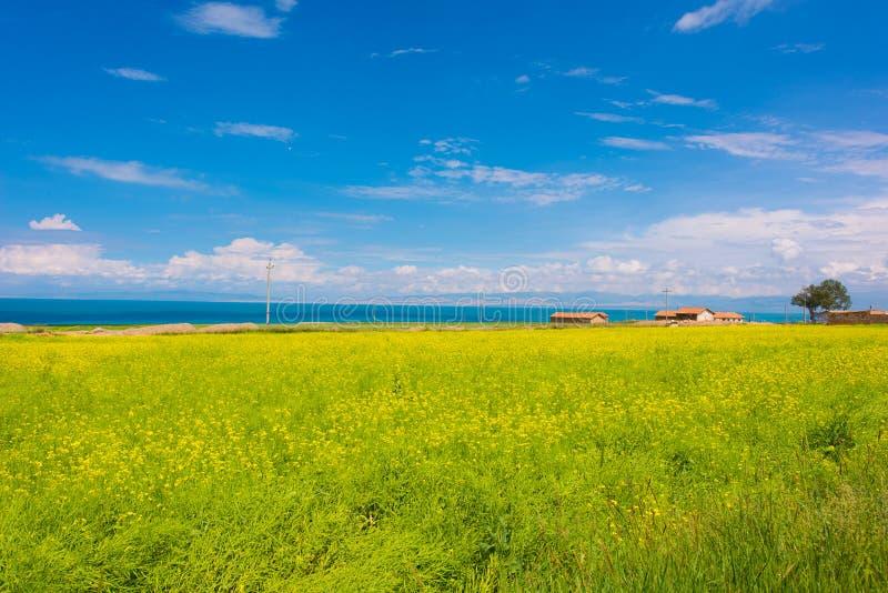 Озеро Цинха стоковая фотография rf