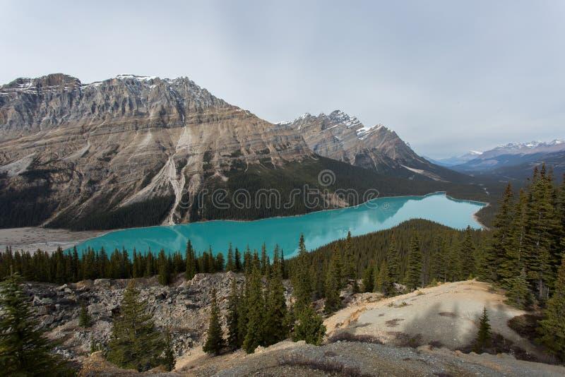 озеро alberta banff Канады обнаружило местонахождение peyto национального парка стоковое изображение