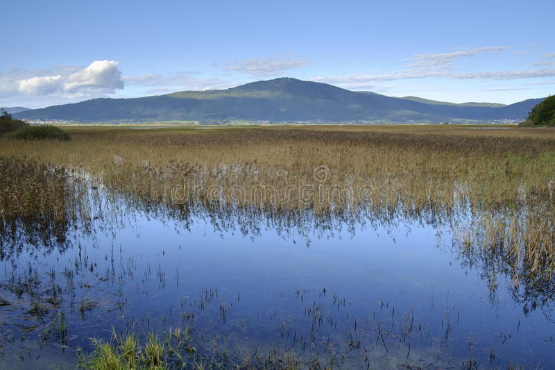 Озеро Cerknica прерывистое стоковые изображения