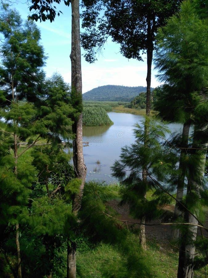 Озеро Chini, Pahang, Малайзия стоковое изображение rf