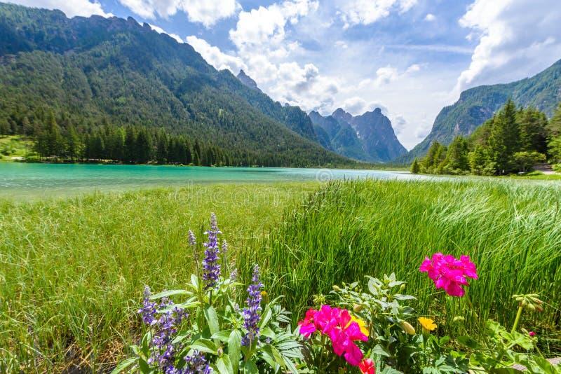 Озеро Dobbiaco (Toblacher видит, Lago di Dobbiaco) в доломите Альп, южном Tirol, Италии - назначении перемещения в Европе стоковая фотография rf