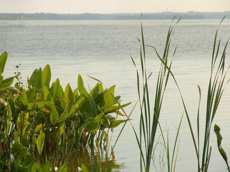 озеро greenery стоковые изображения rf