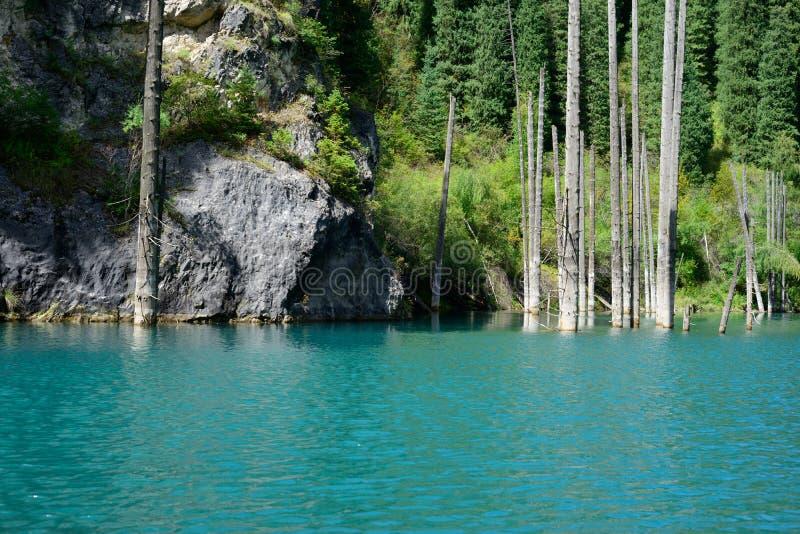 Озеро Kaindy стоковая фотография