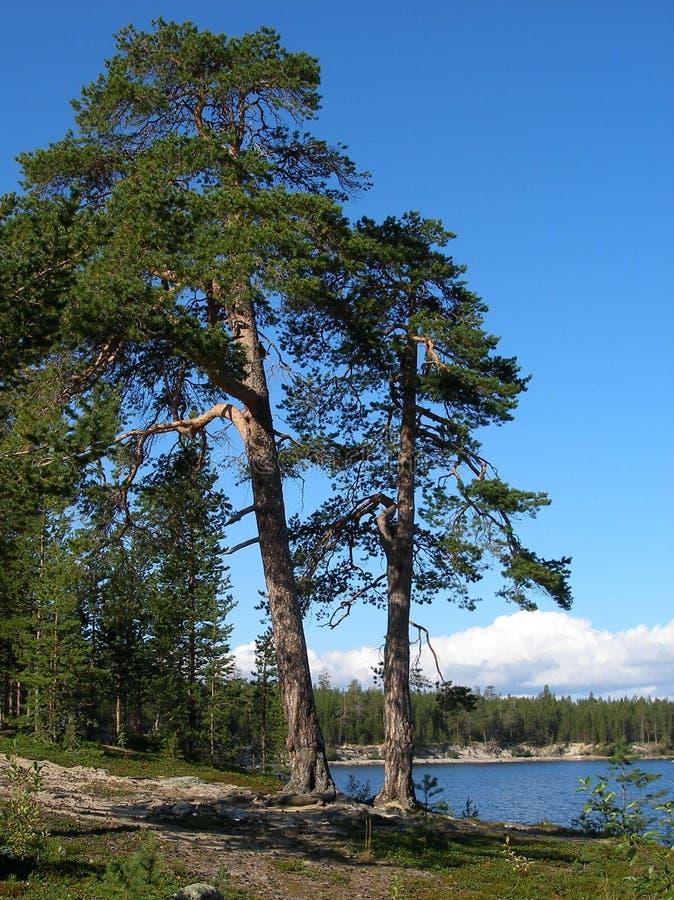озеро kolvitskoe стоковые изображения rf