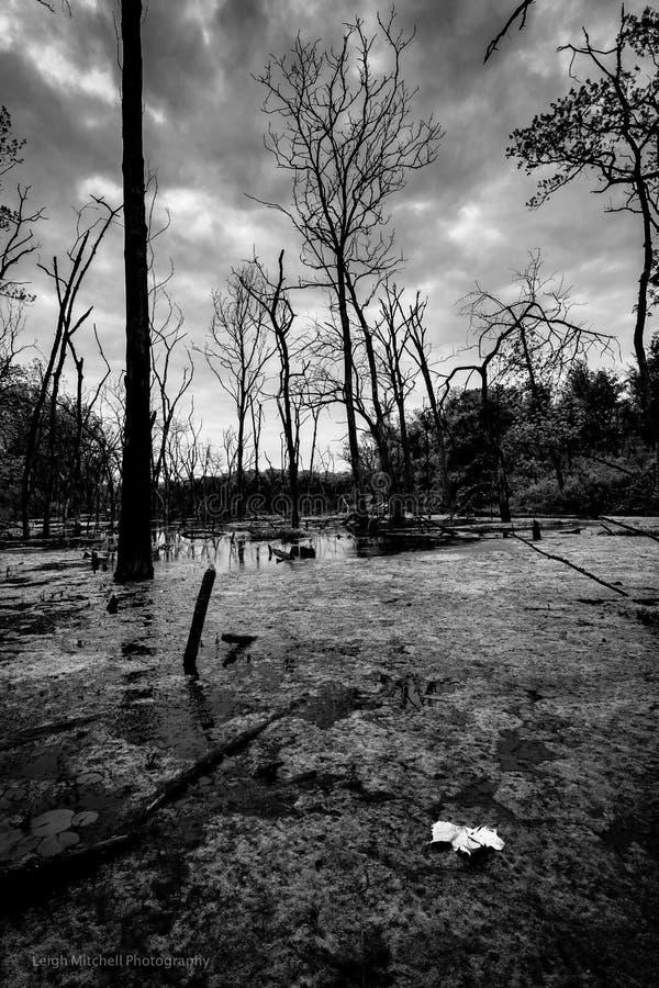 Озеро Lenexa - Канзас стоковая фотография rf