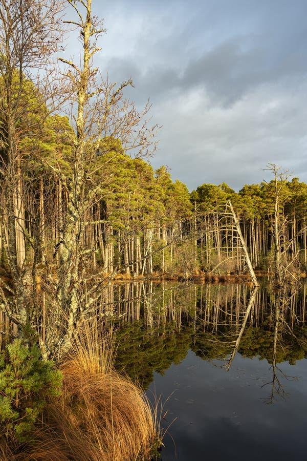 Озеро Mallachie в национальном парке Cairngorms Шотландии стоковая фотография rf