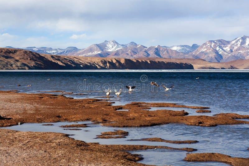 Озеро Manasarovar в западном Tibe стоковое изображение rf