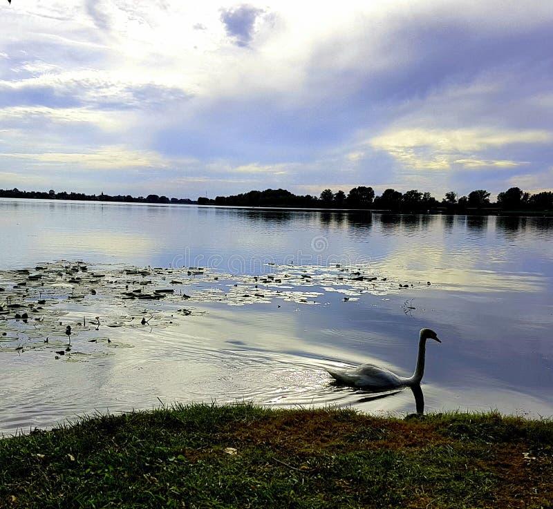 Озеро Mantua стоковая фотография rf