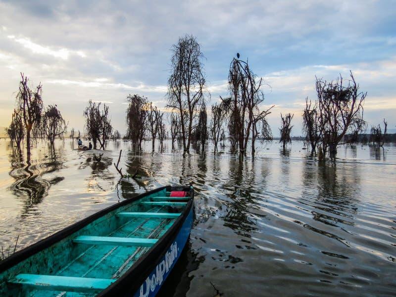Озеро Naivasha с мертвыми деревьями акации стоковое изображение rf